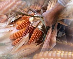 Giorni intensi tra mais, enogastronomia e storia