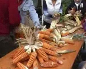 I giorni del melgotto celebrano il mais spinato